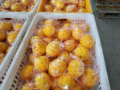 这是一张关于安岳柠檬 2 - 2.6两的产品图片