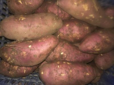 这是一张关于番薯 混装通货 红皮的产品图片