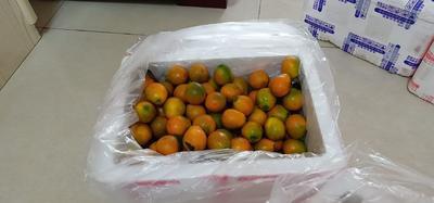 广西壮族自治区桂林市全州县脆皮金桔 2-3cm 1两以下