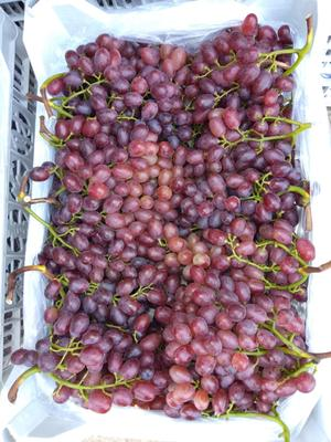 这是一张关于克伦生葡萄 1.5- 2斤 5%以下 1次果的产品图片