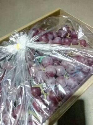 这是一张关于巨峰葡萄 0.6-0.8斤 5%以下 1次果的产品图片