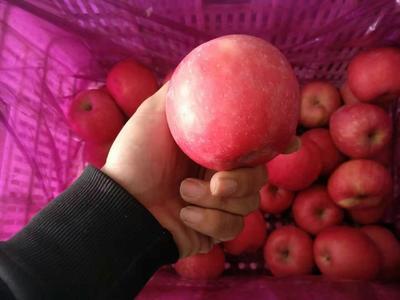 这是一张关于红富士苹果 80mm以上 统货 纸袋的产品图片