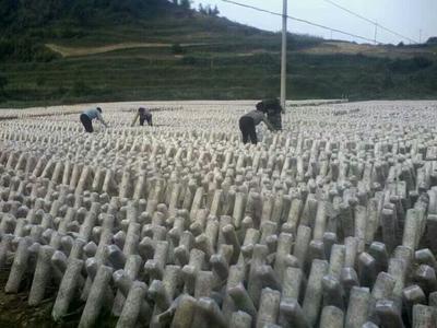 湖南省怀化市溆浦县干黑木耳 1年以上