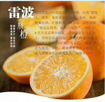 这是一张关于雷波脐橙 75 - 80mm 4-8两的产品图片