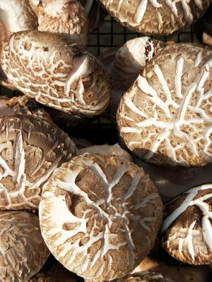 湖北省襄阳市宜城市原木干香菇 散装 1年以上