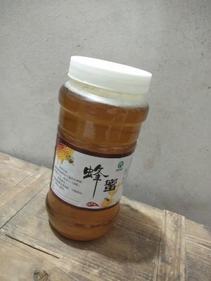 这是一张关于土蜂蜜 塑料瓶装 2年以上 100%的产品图片