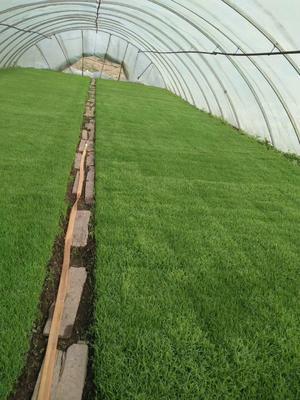 这是一张关于稻花香2号稻谷 晚稻的产品图片