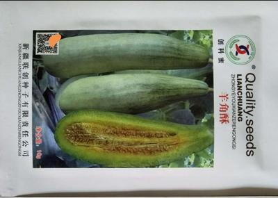 河南省周口市扶沟县甜瓜种子 杂交种 ≥97%