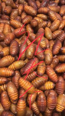 这是一张关于蚕蛹的产品图片