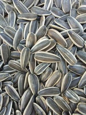 这是一张关于361葵花籽的产品图片