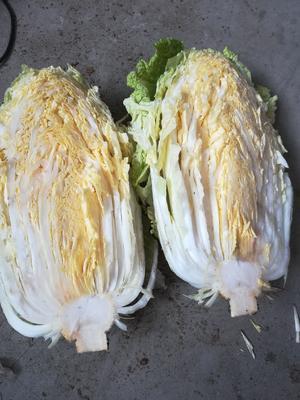 山东省青岛市平度市黄心大白菜 6~10斤 二毛菜