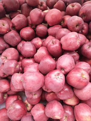 山西省运城市临猗县花牛苹果 70mm以上 表光 光果