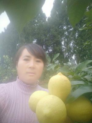 四川省资阳市安岳县安岳柠檬 3.3 - 4.5两