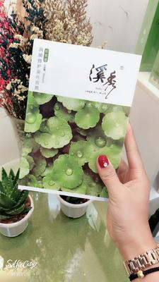 山东省菏泽市牡丹区四季海棠