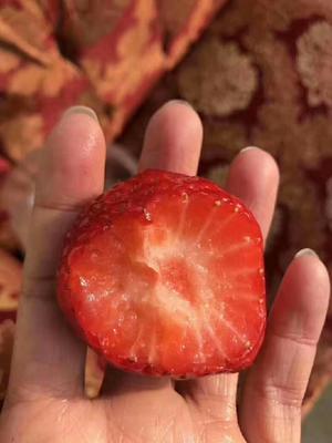 这是一张关于九九草莓 30克以上的产品图片