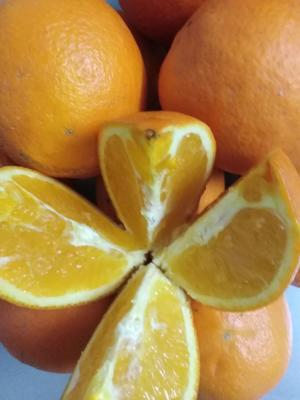 这是一张关于崀山脐橙 70-75mm 4-8两的产品图片