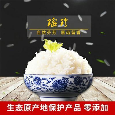 这是一张关于香米  一等品 晚稻 籼米 瑶珍米20斤10kg的产品图片