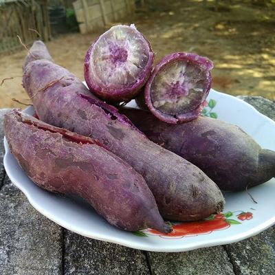 广东省肇庆市封开县一点红红薯 混装通货 紫皮