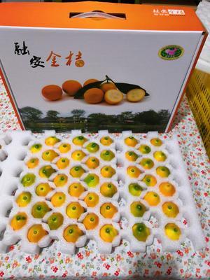 广西壮族自治区柳州市融安县滑皮金桔 3-4cm 1两以下