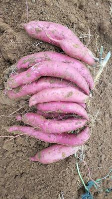 广西壮族自治区桂林市阳朔县西瓜红红薯 紫皮 3两~6两