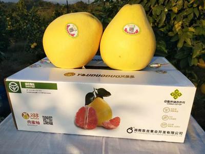 湖南省长沙市芙蓉区红肉蜜柚 1.5斤以上