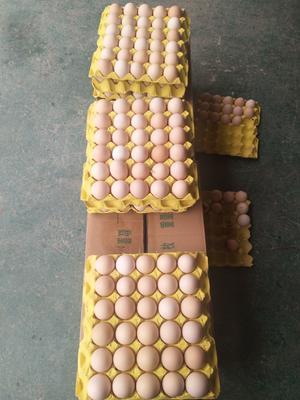 贵州省铜仁市玉屏侗族自治县普通鸡蛋  食用 箱装 每箱360个(枚)