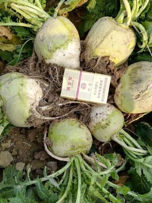 这是一张关于芥菜头的产品图片