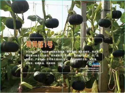 山东省潍坊市昌乐县贝贝南瓜 1~2斤