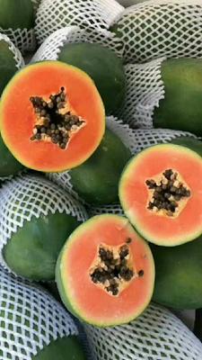 广西壮族自治区桂林市七星区红心木瓜 1 - 1.5斤