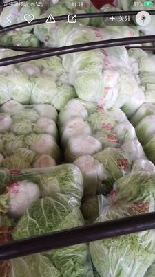 河南省平顶山市汝州市青杂三号白菜 6~10斤 净菜