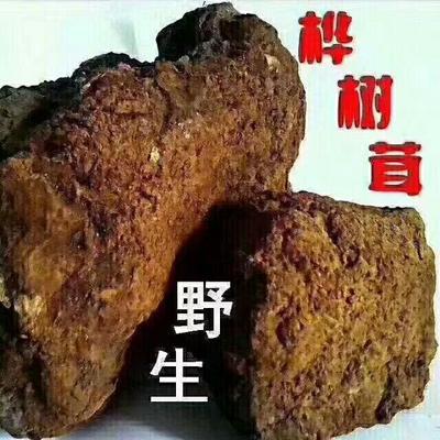 这是一张关于白桦茸 切块 罐装的产品图片