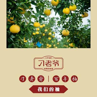 重庆梁平县梁平柚 2.5斤以上