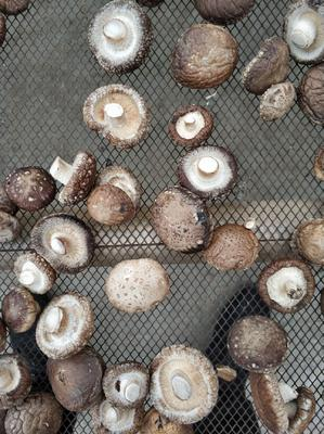 湖北省襄阳市宜城市干香菇0912 散装 半年