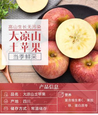 四川省成都市蒲江县昭通苹果  膜袋 70mm以上 统货 四川大凉山盐源丑苹果