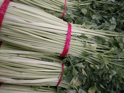 辽宁省盘锦市大洼县空芹菜 55~60cm 0.5斤以下 大棚种植