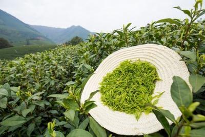 安徽省宣城市广德县野生绿茶 一级 袋装