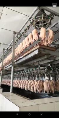 广东省广州市海珠区土鸭 3-4斤 统货 半圈养半散养