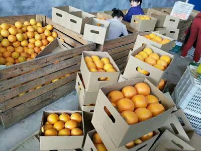 这是一张关于赣南脐橙 75 - 80mm 4-8两 各种规格,按需求发货的产品图片