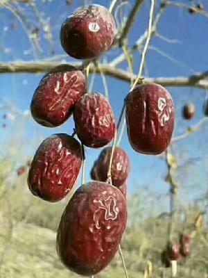 新疆维吾尔自治区喀什地区麦盖提县新疆红枣 合格品