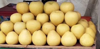 湖北省恩施土家族苗族自治州宣恩县白皮柚 2斤以上