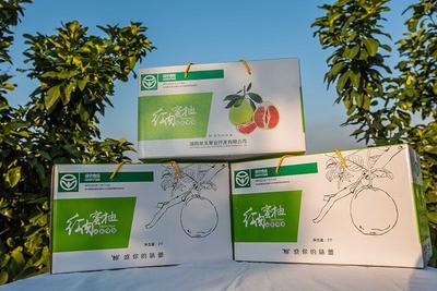 湖南省长沙市芙蓉区红肉蜜柚 3斤以上