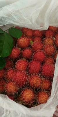 这是一张关于越南红毛丹 1.5-2cm的产品图片