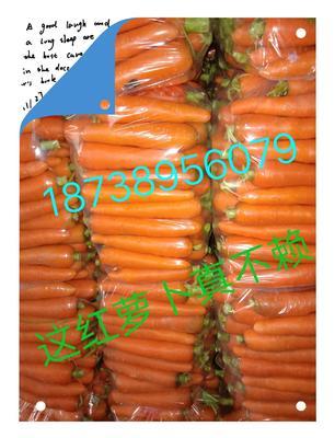 河南省开封市祥符区三红七寸参胡萝卜 10~15cm