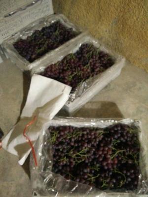 山东省青岛市平度市玫瑰香葡萄 0.6-0.8斤 5%以下 1次果