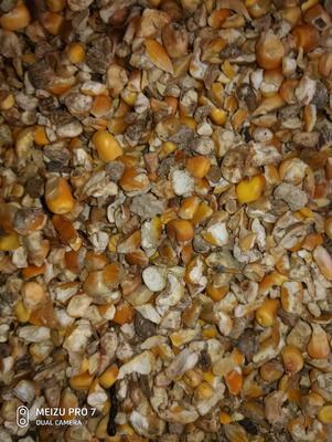 这是一张关于玉米干粮 杂质很少 水份14%-16%的产品图片