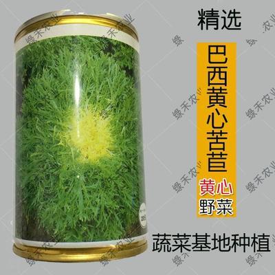 山东省济南市槐荫区苦苣种子  巴西细叶苦苣种子