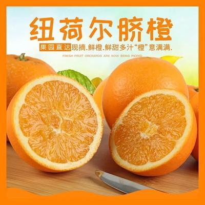 这是一张关于秭归脐橙 65 - 70mm 4-8两的产品图片