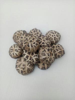 陕西省商洛市商南县普通干香菇 礼盒装 1年