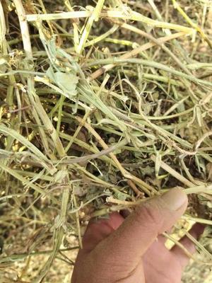 这是一张关于花生秧牛草的产品图片