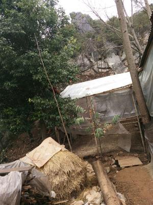 广西壮族自治区桂林市兴安县土鸡 2-3斤 统货
